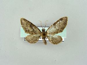 ( - RCIM 0190)  @12 [ ] Copyright (2010) Iva Mihoci Croatian Natural History Museum