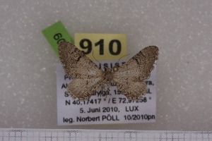 ( - BC NP 0509)  @13 [ ] Copyright (2010) Axel Hausmann/Bavarian State Collection of Zoology (ZSM) SNSB, Zoologische Staatssammlung Muenchen