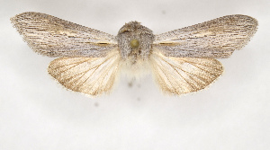 ( - BC ZSM Lep 90268)  @13 [ ] Axel Hausmann/Bavarian State Collection of Zoology (ZSM) (2015) Axel Hausmann/Bavarian State Collection of Zoology (ZSM) SNSB, Zoologische Staatssammlung Muenchen