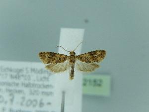 ( - BC ZSM Lep 92152)  @12 [ ] Axel Hausmann/Bavarian State Collection of Zoology (ZSM) (2015) Axel Hausmann/Bavarian State Collection of Zoology (ZSM) SNSB, Zoologische Staatssammlung Muenchen