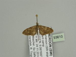 ( - BC ZSM Lep 93610)  @11 [ ] by-nc-sa (2016) SNSB, Staatliche Naturwissenschaftliche Sammlungen Bayerns ZSM (SNSB, Zoologische Staatssammlung Muenchen)
