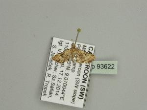 ( - BC ZSM Lep 93622)  @12 [ ] by-nc-sa (2016) SNSB, Staatliche Naturwissenschaftliche Sammlungen Bayerns ZSM (SNSB, Zoologische Staatssammlung Muenchen)