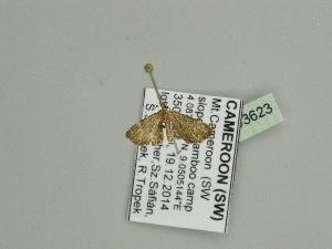 (Eupithecia AH07Ca - BC ZSM Lep 93623)  @13 [ ] CreativeCommons - Attribution Non-Commercial Share-Alike (2016) SNSB, Staatliche Naturwissenschaftliche Sammlungen Bayerns ZSM (SNSB, Zoologische Staatssammlung Muenchen)