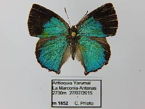 (Rhamma - CP Lep 0525)  @14 [ ] by-nc-sa (2016) SNSB, Staatliche Naturwissenschaftliche Sammlungen Bayerns ZSM (SNSB, Zoologische Staatssammlung Muenchen)