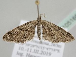 ( - BC ZSM Lep 105166)  @11 [ ] by-nc-sa (2019) SNSB, Staatliche Naturwissenschaftliche Sammlungen Bayerns ZSM (SNSB, Zoologische Staatssammlung Muenchen)