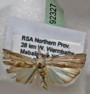 (Culladiella - BC ZSM Lep 92327)  @11 [ ] by-nc-sa (2016) SNSB, Staatliche Naturwissenschaftliche Sammlungen Bayerns ZSM (SNSB, Zoologische Staatssammlung Muenchen)