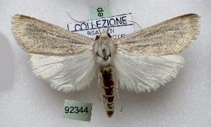 (Charltona - BC ZSM Lep 92344)  @11 [ ] by-nc-sa (2016) SNSB, Staatliche Naturwissenschaftliche Sammlungen Bayerns ZSM (SNSB, Zoologische Staatssammlung Muenchen)