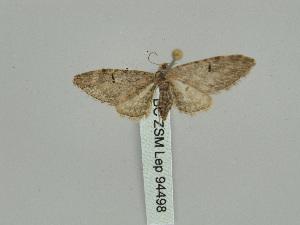( - BC ZSM Lep 94498)  @12 [ ] by-nc-sa (2016) SNSB, Staatliche Naturwissenschaftliche Sammlungen Bayerns ZSM (SNSB, Zoologische Staatssammlung Muenchen)