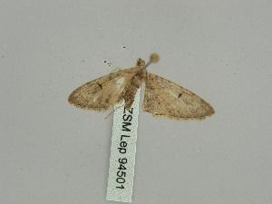 ( - BC ZSM Lep 94501)  @12 [ ] by-nc-sa (2016) SNSB, Staatliche Naturwissenschaftliche Sammlungen Bayerns ZSM (SNSB, Zoologische Staatssammlung Muenchen)