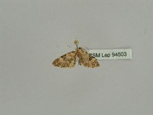 ( - BC ZSM Lep 94503)  @11 [ ] by-nc-sa (2016) SNSB, Staatliche Naturwissenschaftliche Sammlungen Bayerns ZSM (SNSB, Zoologische Staatssammlung Muenchen)