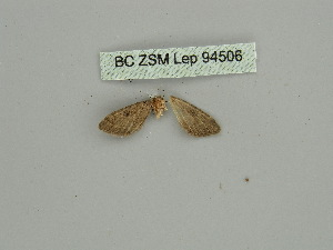 (Eupithecia PD01 - BC ZSM Lep 94506)  @11 [ ] CreativeCommons - Attribution Non-Commercial Share-Alike (2016) SNSB, Staatliche Naturwissenschaftliche Sammlungen Bayerns ZSM (SNSB, Zoologische Staatssammlung Muenchen)