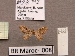 ( - BC ZSM Lep 97860)  @11 [ ] by-nc-sa (2017) SNSB, Staatliche Naturwissenschaftliche Sammlungen Bayerns ZSM (SNSB, Zoologische Staatssammlung Muenchen)