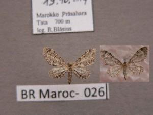 ( - BC ZSM Lep 97871)  @12 [ ] by-nc-sa (2017) SNSB, Staatliche Naturwissenschaftliche Sammlungen Bayerns ZSM (SNSB, Zoologische Staatssammlung Muenchen)