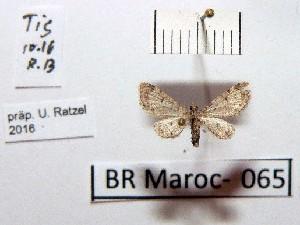( - BC ZSM Lep 97896)  @11 [ ] by-nc-sa (2017) SNSB, Staatliche Naturwissenschaftliche Sammlungen Bayerns ZSM (SNSB, Zoologische Staatssammlung Muenchen)