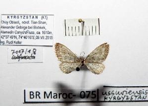 ( - BC ZSM Lep 97900)  @11 [ ] by-nc-sa (2017) SNSB, Staatliche Naturwissenschaftliche Sammlungen Bayerns ZSM (SNSB, Zoologische Staatssammlung Muenchen)
