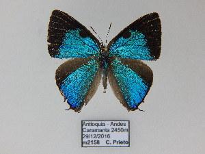 (Beatheclus - CP Lep 732)  @11 [ ] by-nc-sa (2017) SNSB, Staatliche Naturwissenschaftliche Sammlungen Bayerns ZSM (SNSB, Zoologische Staatssammlung Muenchen)