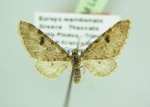 ( - BC ZSM Lep 98140)  @11 [ ] by-nc-sa (2018) SNSB, Staatliche Naturwissenschaftliche Sammlungen Bayerns ZSM (SNSB, Zoologische Staatssammlung Muenchen)