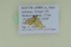 ( - BC ZSM Lep 102600)  @11 [ ] by-nc-sa (2018) SNSB, Staatliche Naturwissenschaftliche Sammlungen Bayerns ZSM (SNSB, Zoologische Staatssammlung Muenchen)