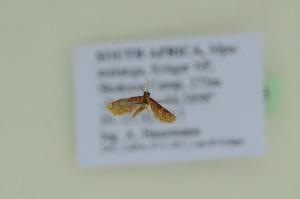 ( - BC ZSM Lep 102603)  @11 [ ] by-nc-sa (2018) SNSB, Staatliche Naturwissenschaftliche Sammlungen Bayerns ZSM (SNSB, Zoologische Staatssammlung Muenchen)
