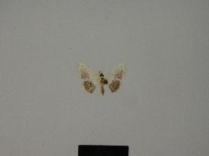 (Scopula nigralba - BC ZSM Lep 77824)  @11 [ ] CreativeCommons - Attribution Non-Commercial Share-Alike (2013) Axel Hausmann SNSB, Zoologische Staatssammlung Muenchen