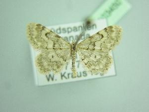 ( - BC ZSM Lep 103450)  @11 [ ] by-nc-sa (2018) SNSB, Staatliche Naturwissenschaftliche Sammlungen Bayerns ZSM (SNSB, Zoologische Staatssammlung Muenchen)