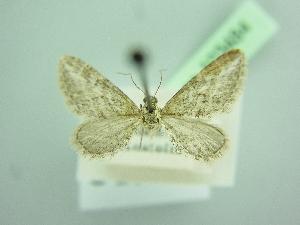 ( - BC ZSM Lep 103484)  @11 [ ] by-nc-sa (2018) SNSB, Staatliche Naturwissenschaftliche Sammlungen Bayerns ZSM (SNSB, Zoologische Staatssammlung Muenchen)