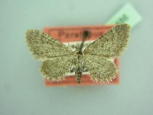( - BC ZSM Lep 103486)  @11 [ ] by-nc-sa (2018) SNSB, Staatliche Naturwissenschaftliche Sammlungen Bayerns ZSM (SNSB, Zoologische Staatssammlung Muenchen)