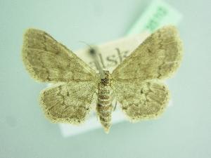 ( - BC ZSM Lep 103510)  @11 [ ] by-nc-sa (2018) SNSB, Staatliche Naturwissenschaftliche Sammlungen Bayerns ZSM (SNSB, Zoologische Staatssammlung Muenchen)