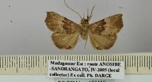 (Hypena malagasy - BC ZSM Lep 106419)  @11 [ ] by-nc-sa (2019) SNSB, Staatliche Naturwissenschaftliche Sammlungen Bayerns ZSM (SNSB, Zoologische Staatssammlung Muenchen)