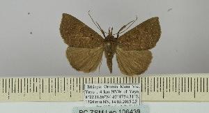 (Hypena chionosticha - BC ZSM Lep 106439)  @11 [ ] by-nc-sa (2019) SNSB, Staatliche Naturwissenschaftliche Sammlungen Bayerns ZSM (SNSB, Zoologische Staatssammlung Muenchen)