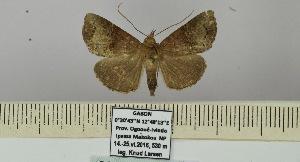 (Hypena kratochvili - BC ZSM Lep 106440)  @11 [ ] by-nc-sa (2019) SNSB, Staatliche Naturwissenschaftliche Sammlungen Bayerns ZSM (SNSB, Zoologische Staatssammlung Muenchen)