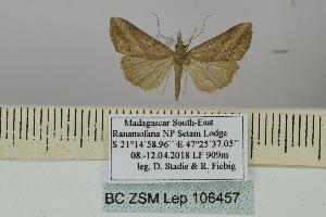 (Hypena simplicalis - BC ZSM Lep 106457)  @11 [ ] CreativeCommons - Attribution Non-Commercial Share-Alike (2019) SNSB, Staatliche Naturwissenschaftliche Sammlungen Bayerns ZSM (SNSB, Zoologische Staatssammlung Muenchen)