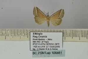 (Hypena semilutea - BC ZSM Lep 106461)  @11 [ ] by-nc-sa (2019) SNSB, Staatliche Naturwissenschaftliche Sammlungen Bayerns ZSM (SNSB, Zoologische Staatssammlung Muenchen)