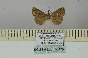 (Hypena puncticosta - BC ZSM Lep 106470)  @11 [ ] by-nc-sa (2019) SNSB, Staatliche Naturwissenschaftliche Sammlungen Bayerns ZSM (SNSB, Zoologische Staatssammlung Muenchen)