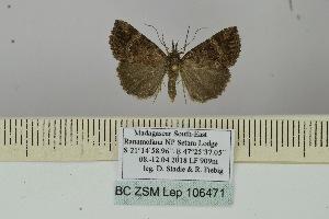 (Hypena sabinis - BC ZSM Lep 106471)  @11 [ ] by-nc-sa (2019) SNSB, Staatliche Naturwissenschaftliche Sammlungen Bayerns ZSM (SNSB, Zoologische Staatssammlung Muenchen)