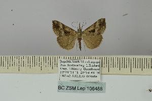 (Hypena tetrasticta - BC ZSM Lep 106488)  @11 [ ] by-nc-sa (2019) SNSB, Staatliche Naturwissenschaftliche Sammlungen Bayerns ZSM (SNSB, Zoologische Staatssammlung Muenchen)