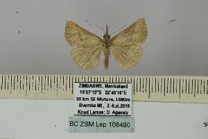 (Hypena laetalimaior - BC ZSM Lep 106490)  @11 [ ] by-nc-sa (2019) SNSB, Staatliche Naturwissenschaftliche Sammlungen Bayerns ZSM (SNSB, Zoologische Staatssammlung Muenchen)