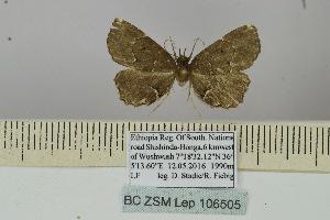 (Niphosticta - BC ZSM Lep 106505)  @11 [ ] by-nc-sa (2019) SNSB, Staatliche Naturwissenschaftliche Sammlungen Bayerns ZSM (SNSB, Zoologische Staatssammlung Muenchen)