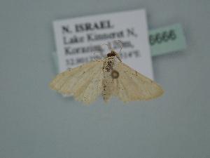 ( - BC ZSM Lep 106666)  @11 [ ] by-nc-sa (2019) SNSB, Staatliche Naturwissenschaftliche Sammlungen Bayerns ZSM (SNSB, Zoologische Staatssammlung Muenchen)