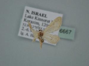 ( - BC ZSM Lep 106667)  @11 [ ] by-nc-sa (2019) SNSB, Staatliche Naturwissenschaftliche Sammlungen Bayerns ZSM (SNSB, Zoologische Staatssammlung Muenchen)