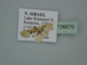 ( - BC ZSM Lep 106670)  @11 [ ] by-nc-sa (2019) SNSB, Staatliche Naturwissenschaftliche Sammlungen Bayerns ZSM (SNSB, Zoologische Staatssammlung Muenchen)