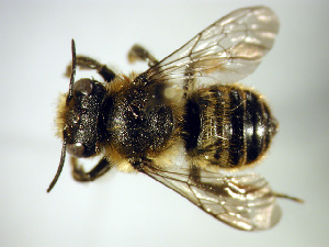 ( - Bee31)  @13 [ ] Copyright (2010) Unspecified Unspecified