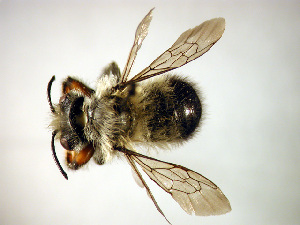 ( - Bee52)  @14 [ ] Copyright (2010) Unspecified Unspecified