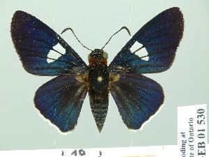 (Gunayan - HESP-EB 01 530)  @15 [ ] Copyright (2010) Ernst Brockmann Research Collection of Ernst Brockmann