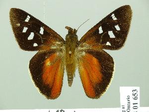 (Alera - HESP-EB 01653)  @14 [ ] Copyright (2010) Ernst Brockmann Research Collection of Ernst Brockmann