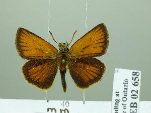 ( - HESP-EB 02 658)  @14 [ ] Copyright (2012) Ersnt Brockmann Research Collection of Ernst Brockmann