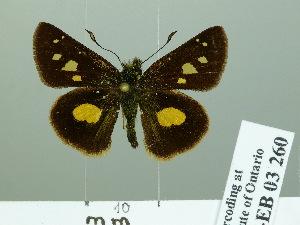 ( - HESP-EB 03 260)  @12 [ ] Copyright (2012) Ersnt Brockmann Research Collection of Ernst Brockmann