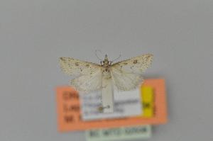 ( - BC MTD 02508)  @11 [ ] Copyright (2012) M. Nuss, Senckenberg Museum of Zoology, Dresden Senckenberg Museum of Zoology, Dresden