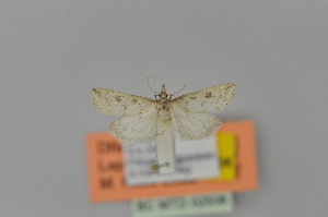 ( - BC MTD 02508)  @11 [ ] Unspecified (default): All Rights Reserved (2012) M. Nuss, Senckenberg Museum of Zoology, Dresden Senckenberg Museum of Zoology, Dresden