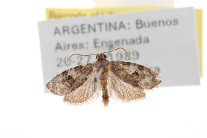 (Bonagota - CCDB-20276-F06)  @14 [ ] CreativeCommons - Attribution Non-Commercial Share-Alike (2013) Andrew J. Frewin Centre for Biodiversity Genomics